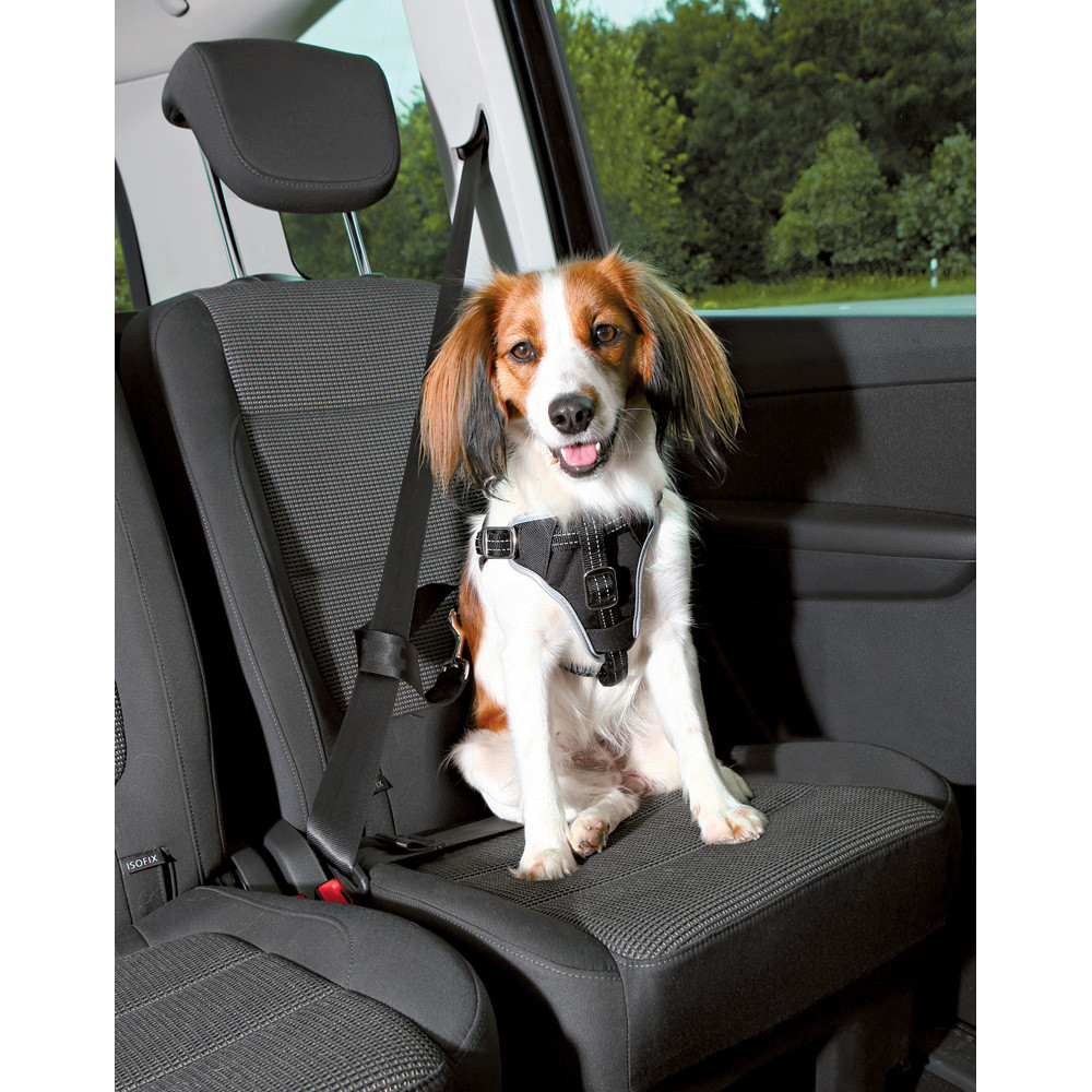 Bilsele Dog Protect, S/M: 40-55 cm/20 mm, svart