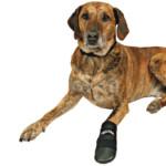 Hundsko neopren 2-pack XXLarge