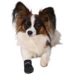 Hundsko neopren 2-pack Small