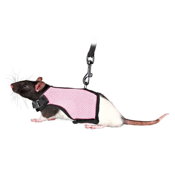 Sele Soft till Råtta & små Marsvin